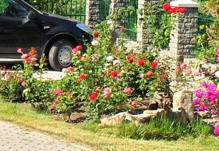 альпийские горки и каменистые садики