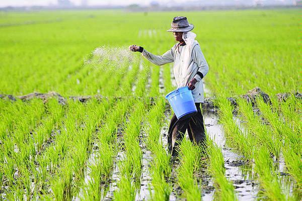 Contoh makalah Pertanian | Contoh Skripsi dan Tugas Akhir