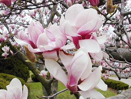 florecen en invierno: