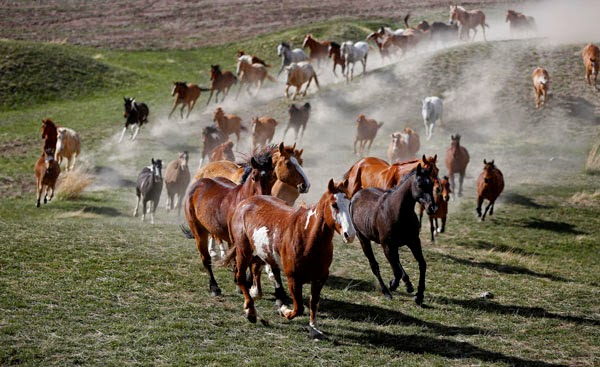 http://blogs.reuters.com/photographers-blog/2012/05/09/montanas-fading-cowboy-culture/