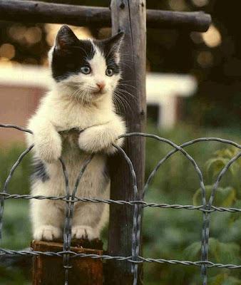 cachorro de gato blanco y negro