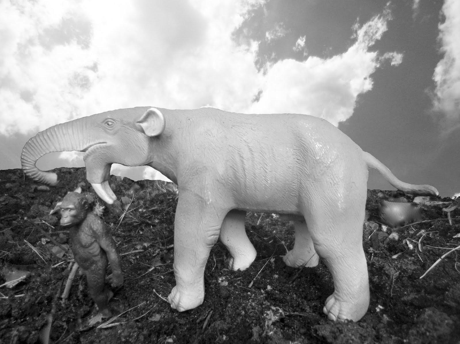 pygmy elephants the book july 2012