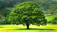 Salvaţi Pădurile Străbune !