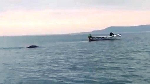 Extraña Criatura es filmada en un Lago de Irlanda [Video].