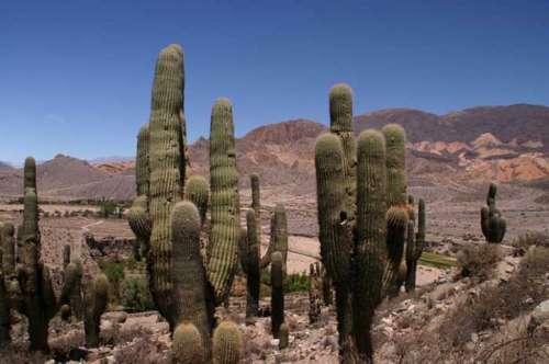 El Parque Nacional los Cardones - Provincia de Salta, La Linda - La Argentina.