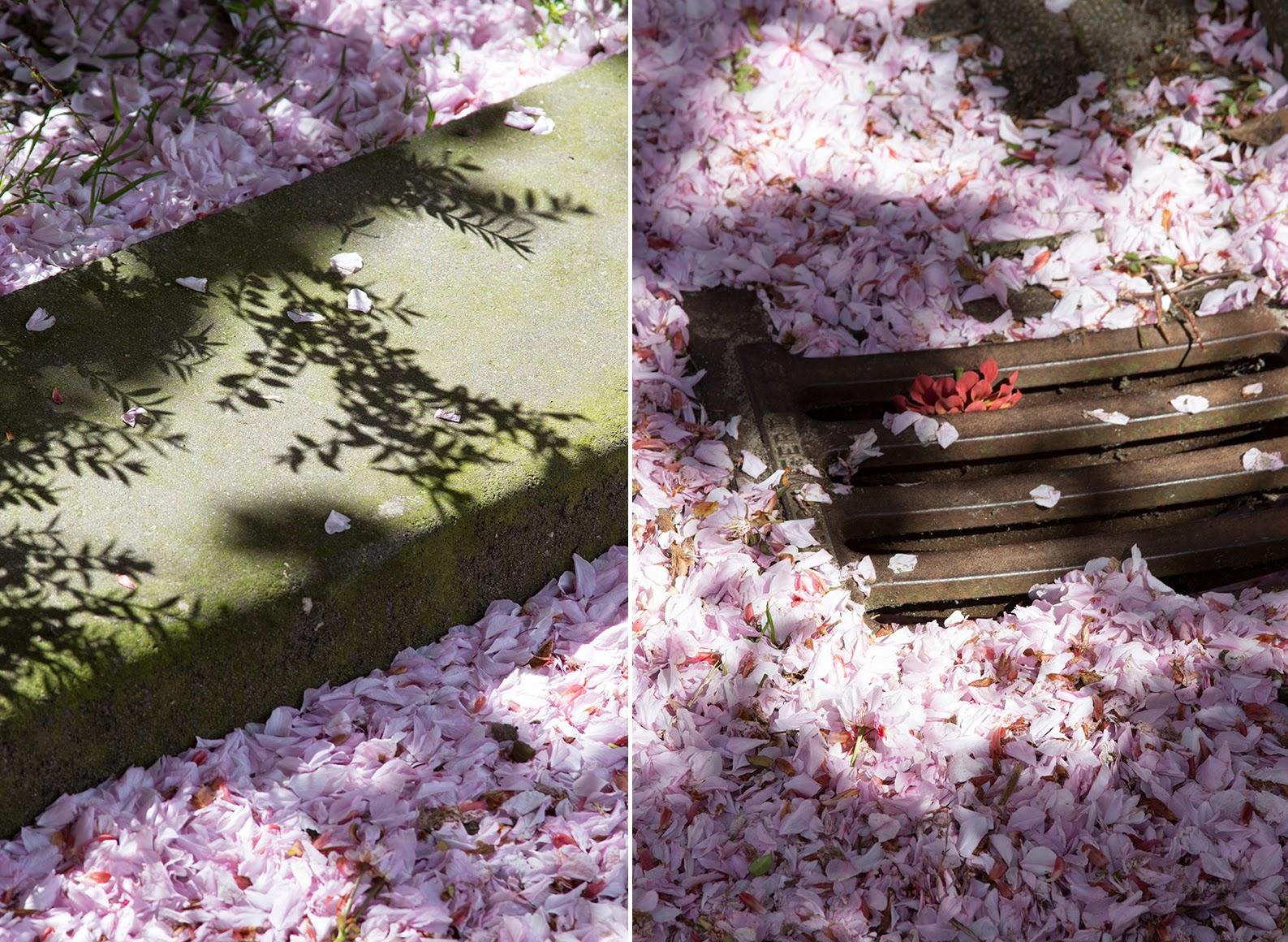 pink petals, shadows and streetcurb