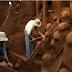 تعرف على وادى النمل الذى ذكر فى القرآن الكريم