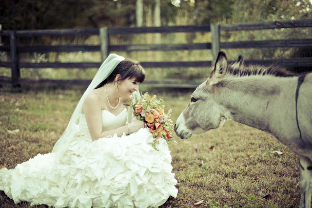 Autumn Wedding with Donkeys by Kelly Is Nice Photography - www.kellyisnice.com