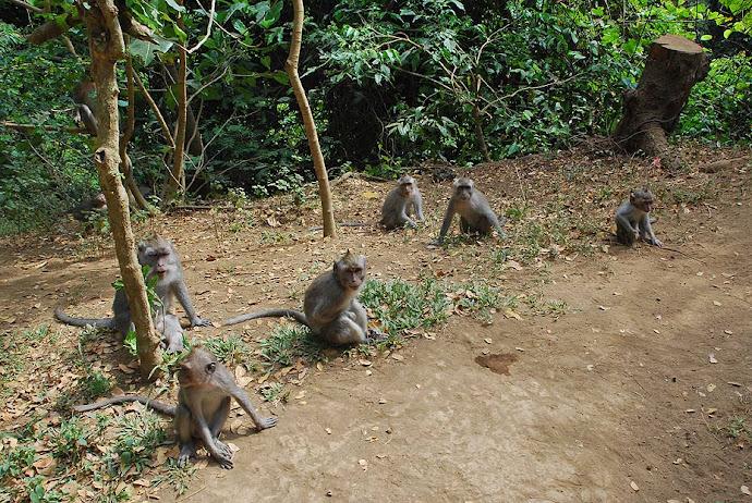 Manada de monos