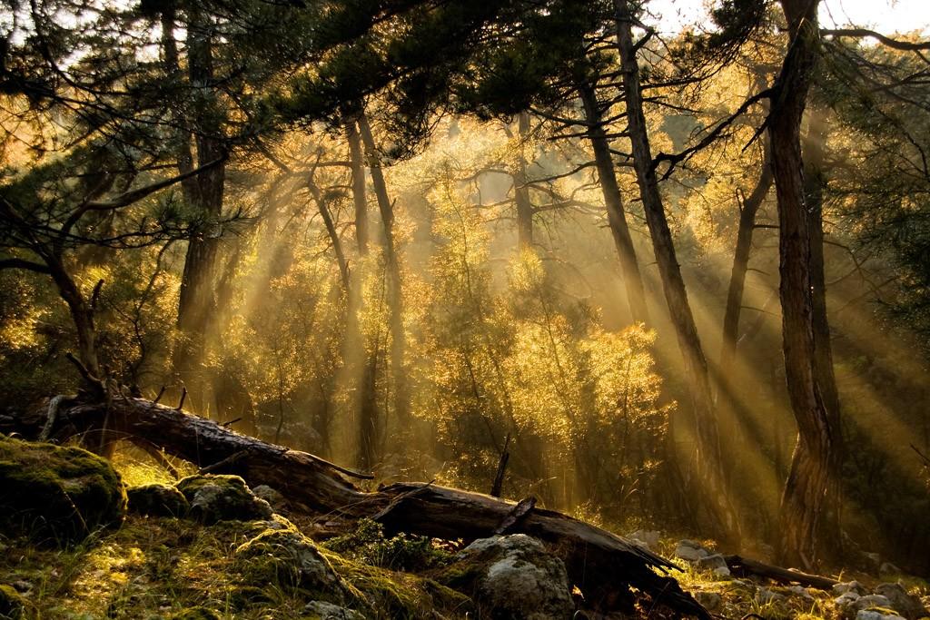 Το απολιθωμένο δάσος της δαδιάς στον
