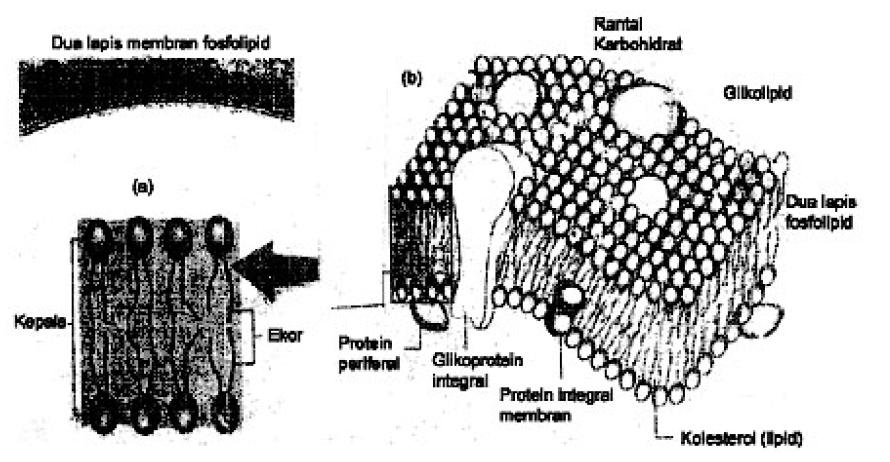 yaitu molekul yang mengandung atom karbon  4 Macam Molekul Organik