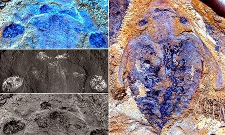 Monstro marinho antigo tinha cérebro inexpressivo
