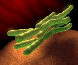 كل ما تريد معرفته عن بكتيريا إي كولاي