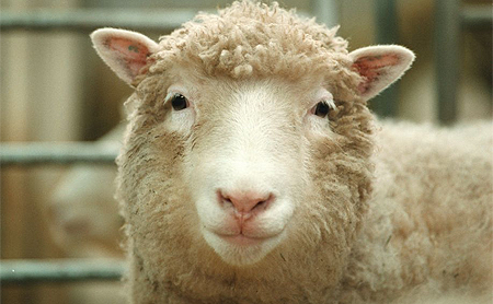 an introduction to the history of cloning sheep dolly