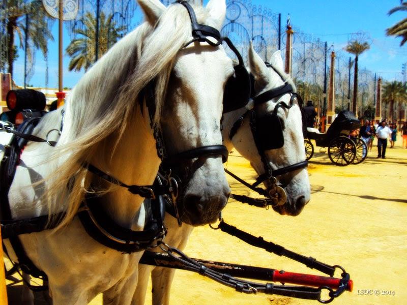 Feria del Caballo Jerez 2014