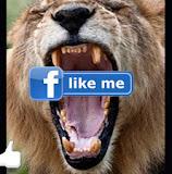 Visit Me on Facebook