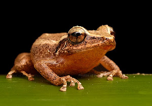 Big coqui I am too, that's true