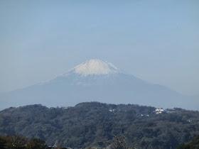 浄明寺緑地からの富士