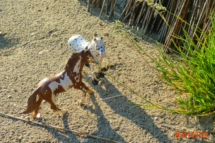 dos caballos salvajes en miniatura