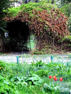 arcada si lalele gradina botanica bucuresti