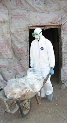 muta el virus de Gripe Aviar mas contagioso trabajador de salud pakistaní