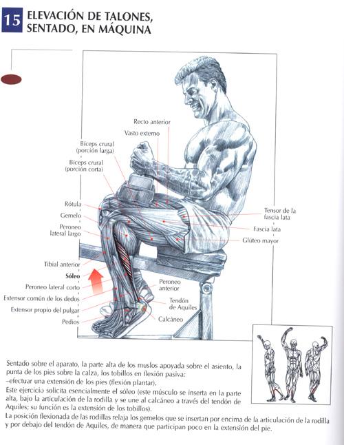 Ejercicios para el gym ejercicios para pantorrillas for Ejercicios de gym