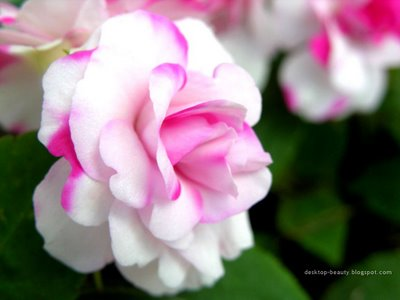 beautiful flower pictures in the world, Natural flower