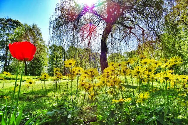 Присадибний парк в центрі нашого «містечка»