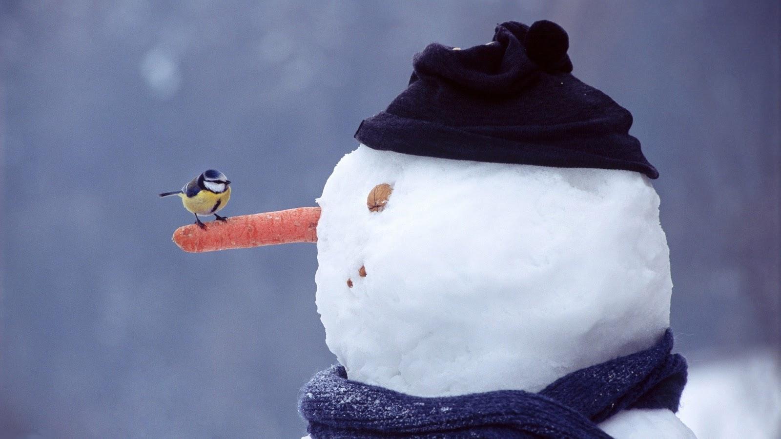 http://2.bp.blogspot.com/-3AKfteqVpWM/Tq68yk9RF8I/AAAAAAAAPsE/z3ht8r36gEM/s1600/Mooie-sneeuwpop-achtergronden-leuke-hd-sneeuwpop-wallpapers-afbeelding-plaatje-2.jpg