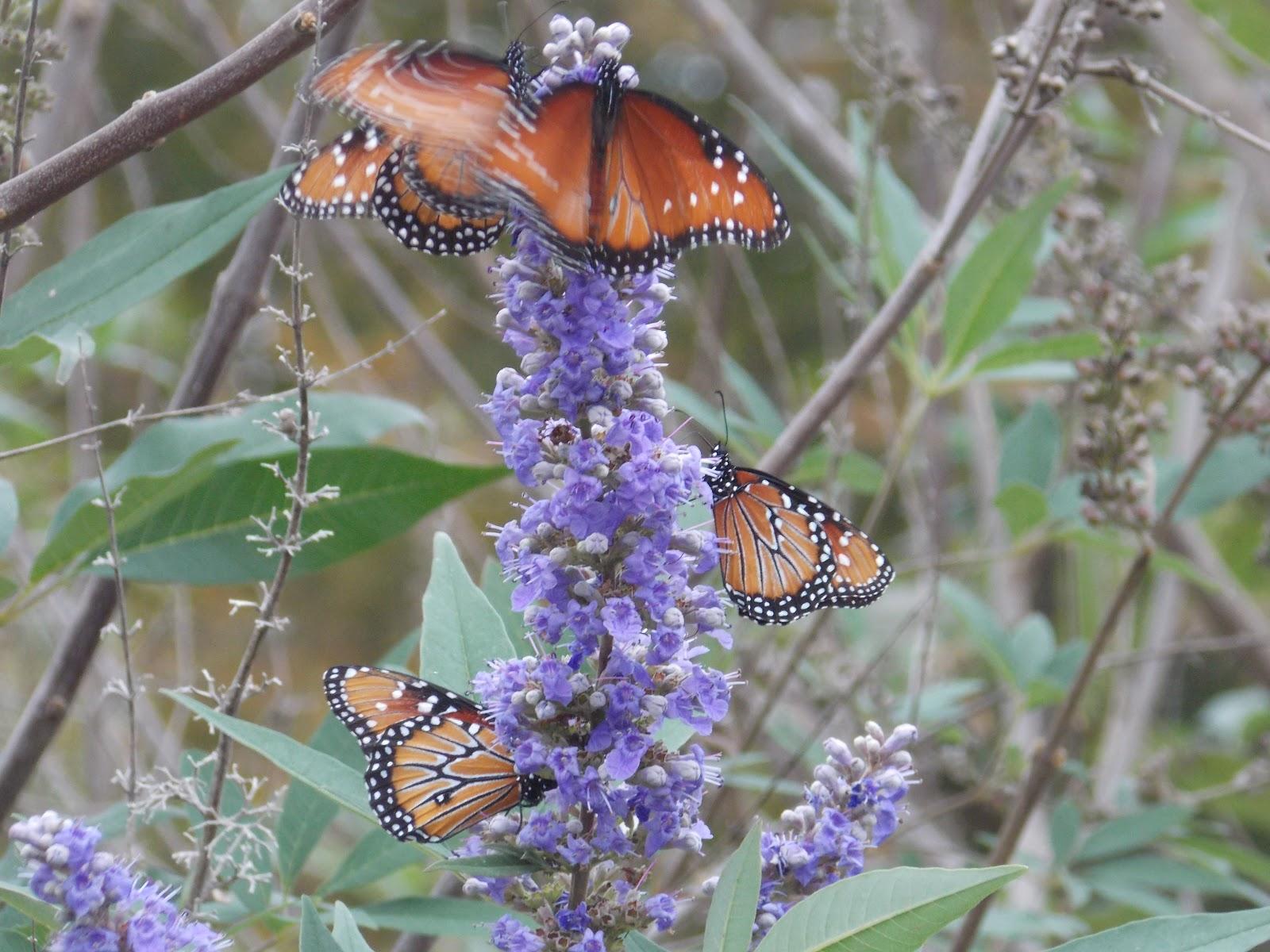 The Schramm Journey South Texas Botanical Gardens And Nature Center