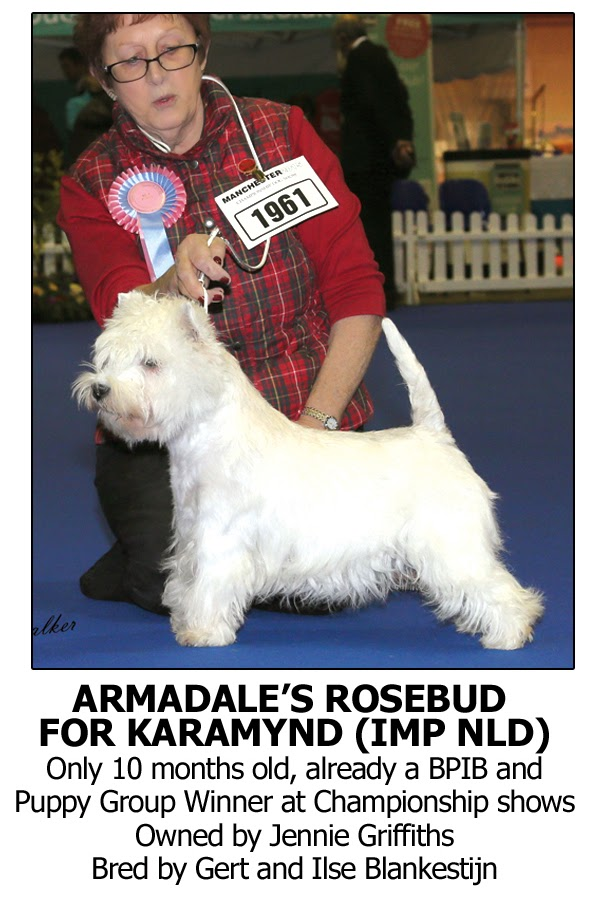 Best Dog Shampoo for West Highland Terrier, Westies