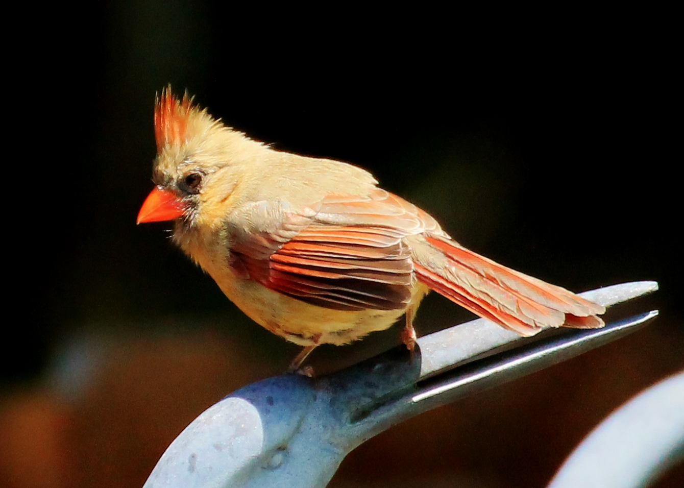 About Us Photographer Cornwall - Exposure Photo Agency Baby female cardinal pictures