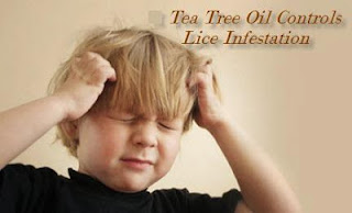 Tea Tree Oil Safe Treatment for Lice