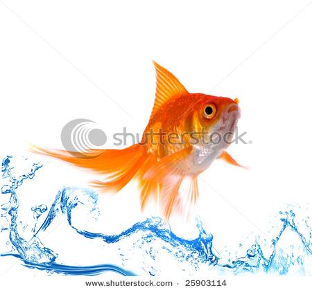 Goldfish 5