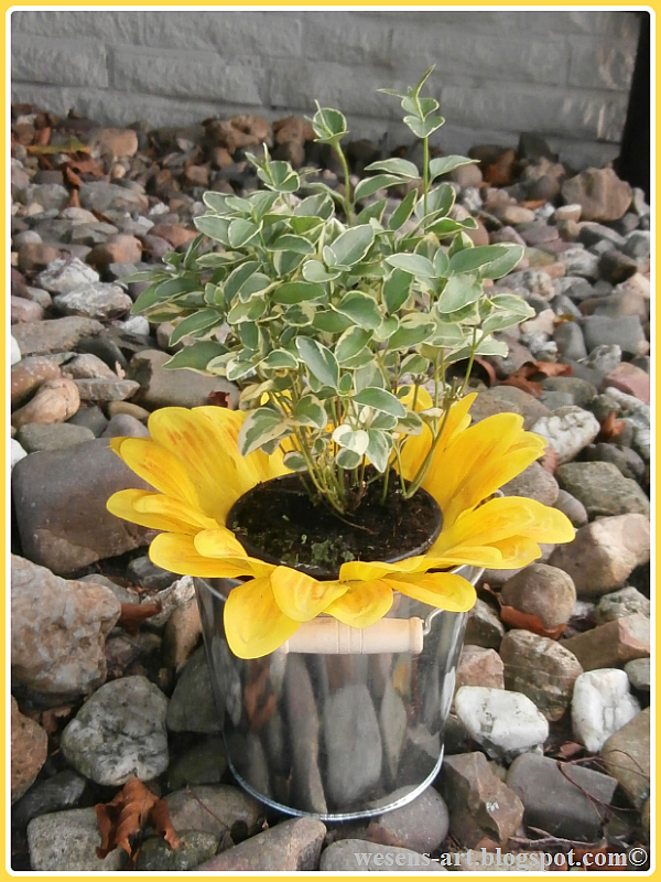 sunny potted plant   wesens-art.blogspot.com