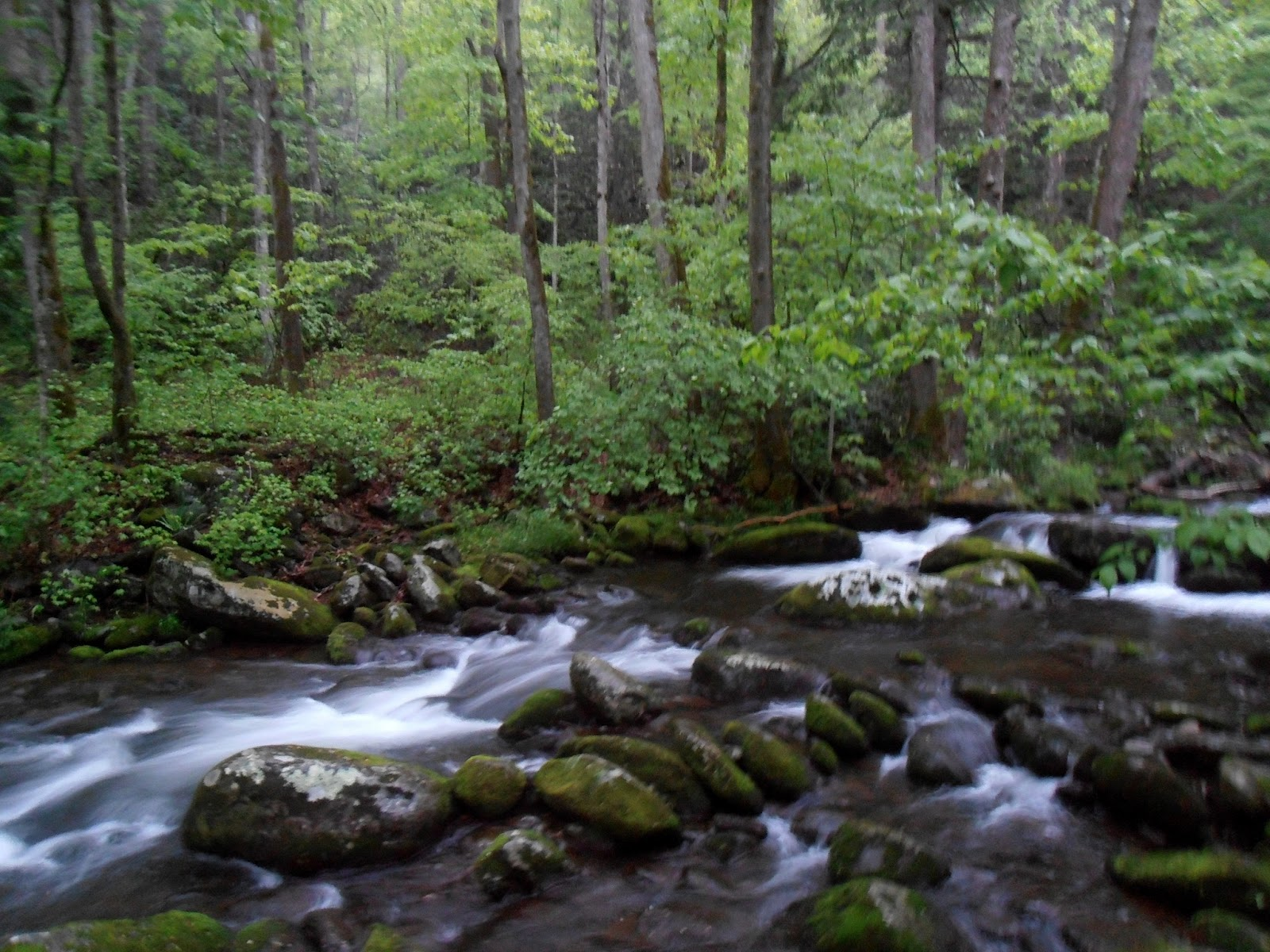 American travel journal roaring fork great smoky for Roaring fork smoky mountains