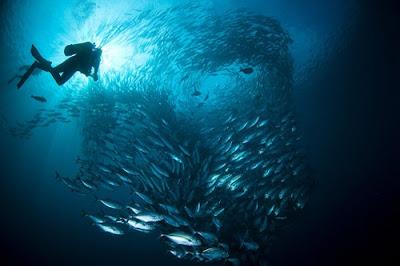 صور تحت الماء رائعة جدا-منتهى