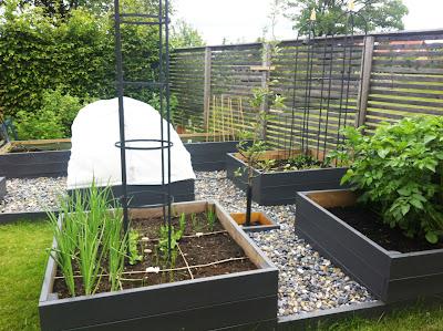 Cattis och Eiras Trädgårdsdesign: Min nya köksträdgård och lite ...