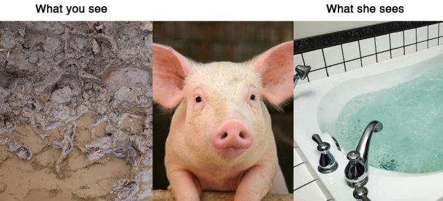 animal testing vs human testing