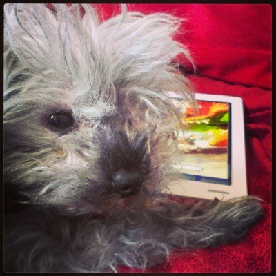 A fuzzy grey poodle, Murchie, presses his face close to the camera. Behind him sits a white Kobo with the cover of Rat Queens on its screen.