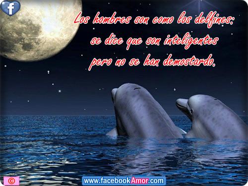 Imagenes de delfines con frases etiquetar en facebook - Imágenes ...