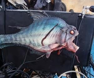 Ikan teraneh didunia