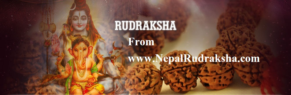 Rudraksha in Nepal - Buy Rudraksh Beads From Nepal ,Saligram Stone ...