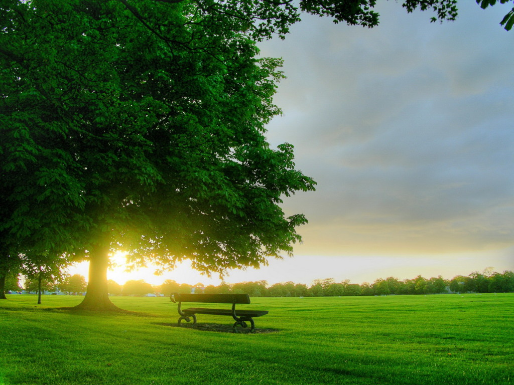 Download this Green Nature Wallpapers picture