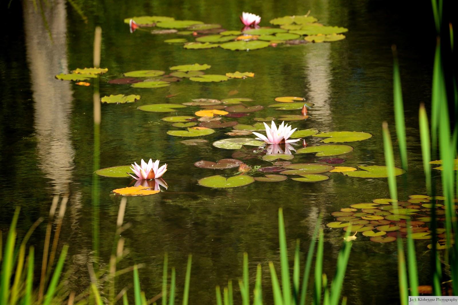 Denise Jack Botanical Gardens Steamboat Springs Colorado Jack Klobetanz Photography