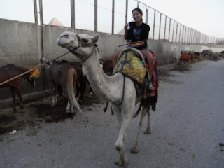 Egypt, Pyramid of Giza, Land of THE MUMMY and Pharoah, me on the camel