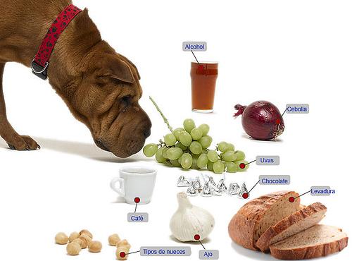 solución alimento para perros desnutridos sigue este metodo   super