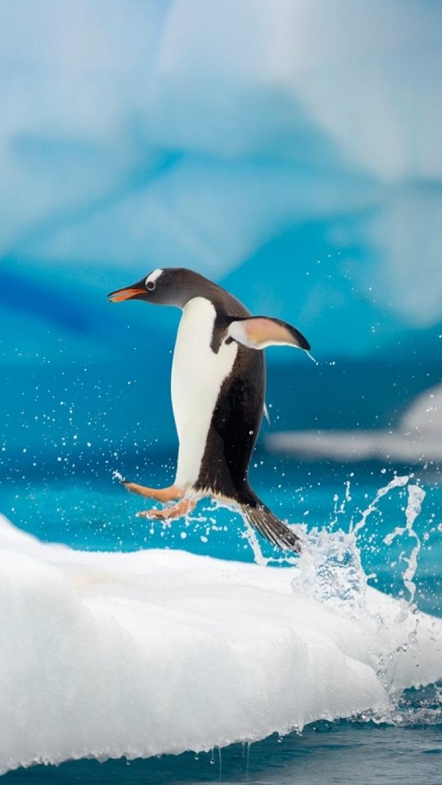 Penguin,Jumping,iPhone,5,wallpaper サイズ:640x1136 ペンギン