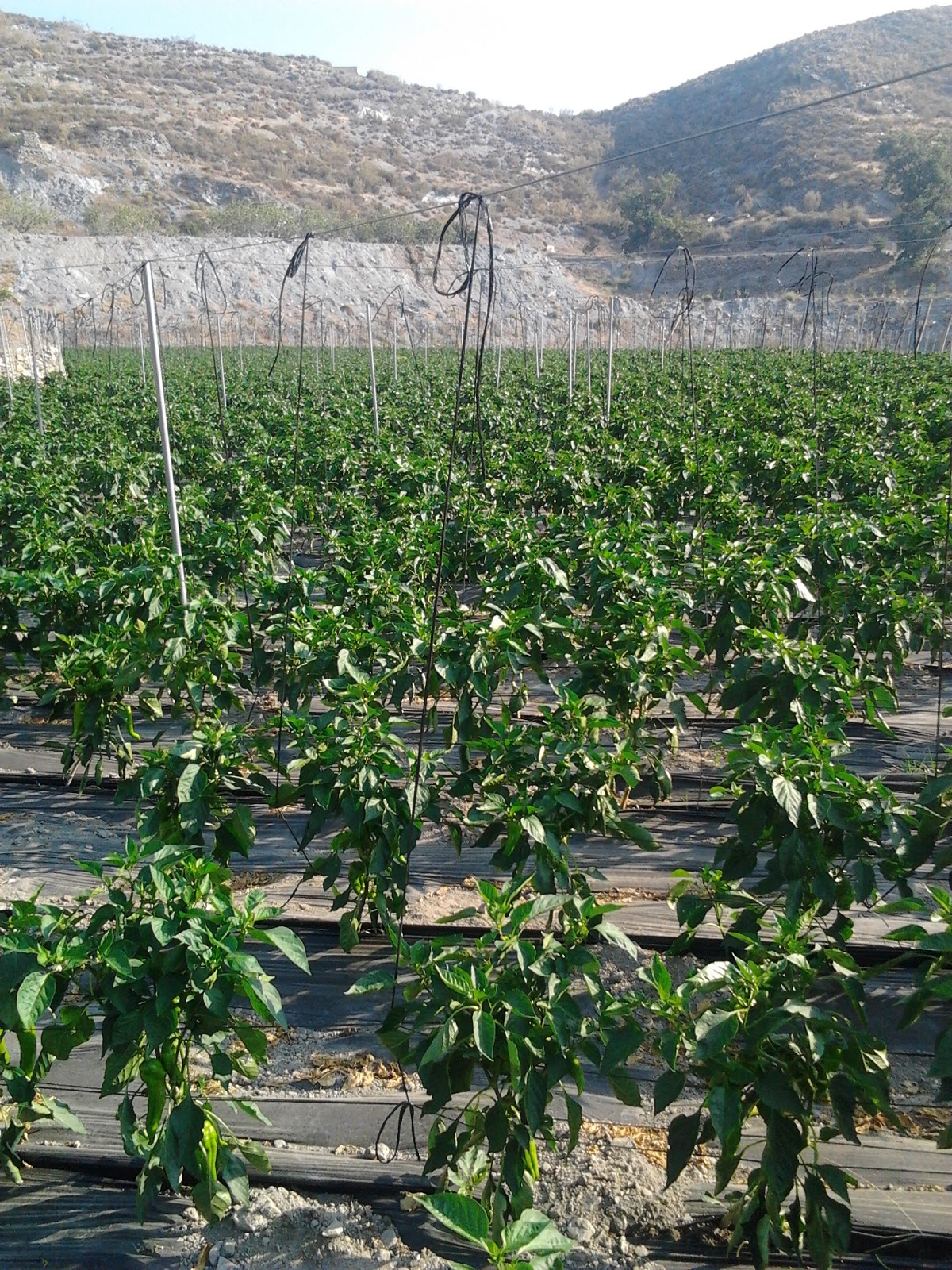 homo agricola calle On desarrollo de plantas al aire libre