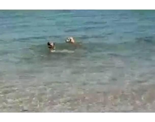 (Video) Dog Bites Shark - AMAZING ATTACK - YouTube